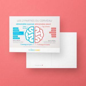 Les 2 parties du cerveau
